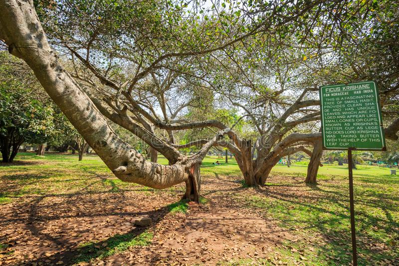 Lal Bagh Botanical Garden - Bangalore/Bengaluru. Beautiful view of Lal Bagh Botanical Garden, one of the tourist attractions in Bangalore, with plenty variety of stock images