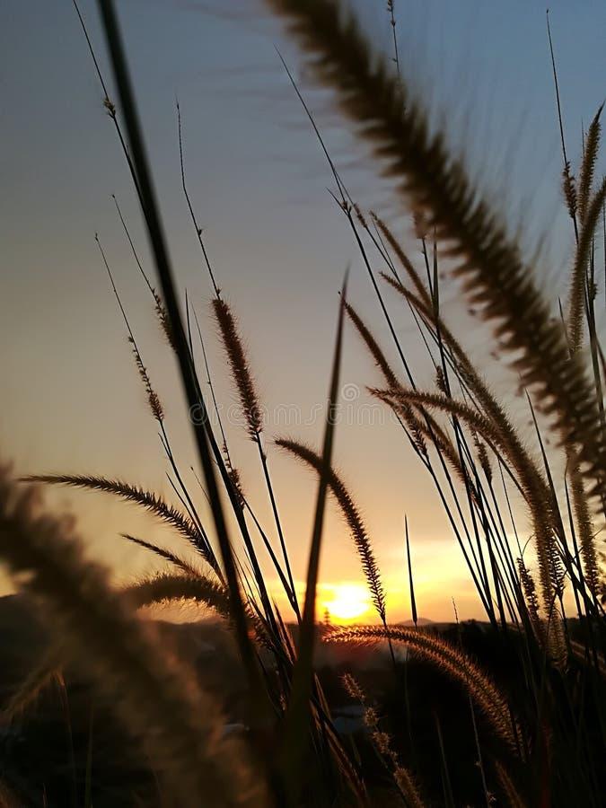 Lalanggras bij zonsondergang royalty-vrije stock afbeelding