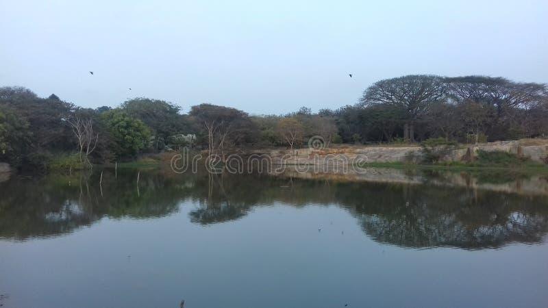 Lalbagh botanical garden, Bangalore. Lotus pond at Lalbagh botanical garden, Bangalore, Karnataka, India stock image