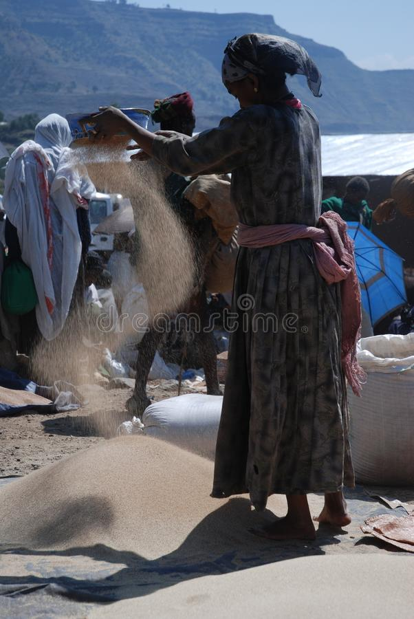 Lalibela, Wollo, Ethiopia, circa February 2007: Woman threshing teff stock photos