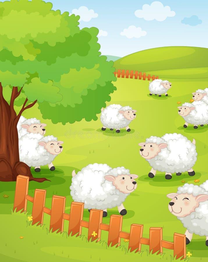 Lam op groen gras royalty-vrije illustratie