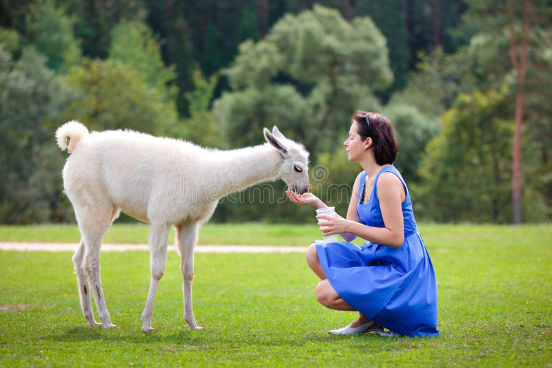 Lama alimentant de chéri de jeune femme attirant image libre de droits