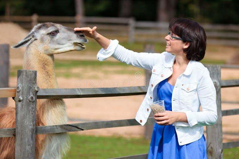 Lama alimentant de jeune femme attirante image stock