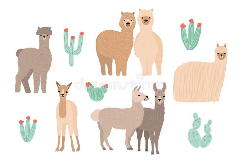 Lama, alpaca linda y cactus fijados Ejemplo colorido dibujado mano del vector de la historieta libre illustration