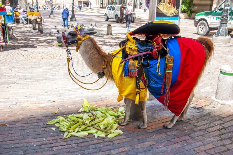Lama com bandeira colombiana imagens de stock