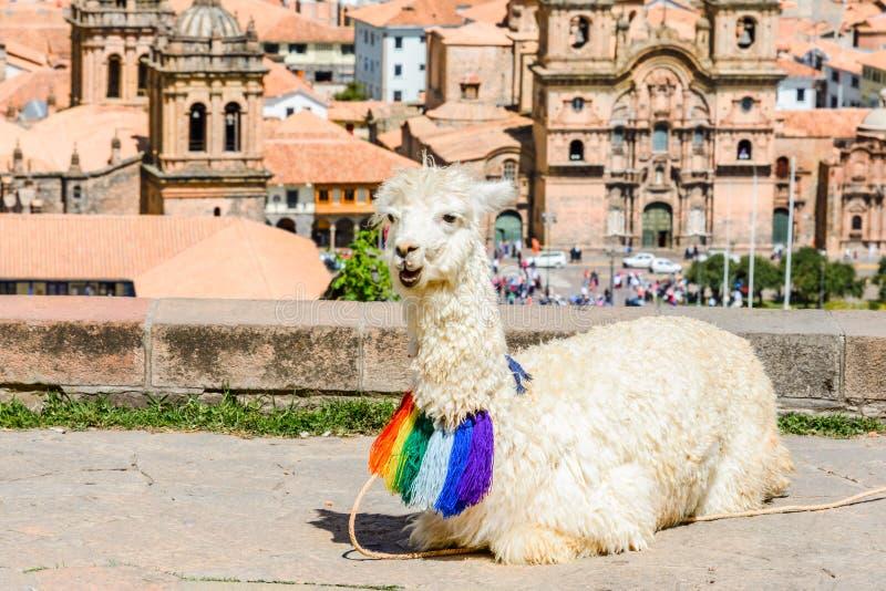 Lama durmiente en el San Cristobal Church, Cusco, Perú fotos de archivo libres de regalías