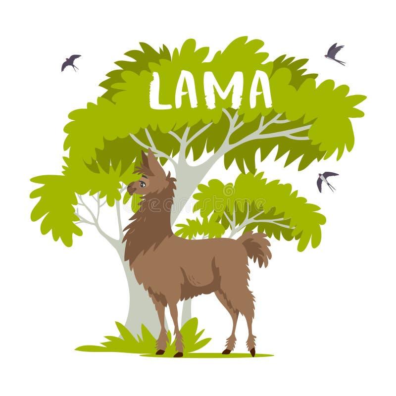 Lama et arbre photos stock