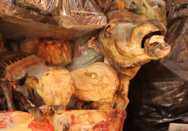A Lama Fetus no mercado foto de stock