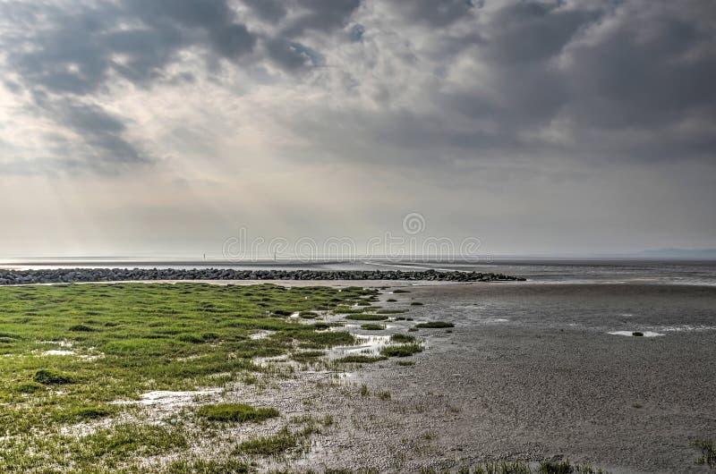 Lama, grama e rochas em uma praia infinita imagem de stock