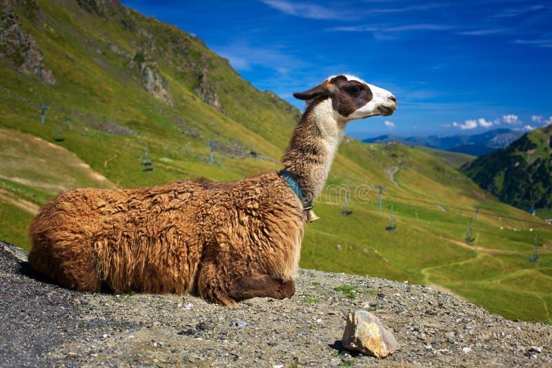 Download Lama stock photo. Image of summer, llama, landscape, animal - 34636990