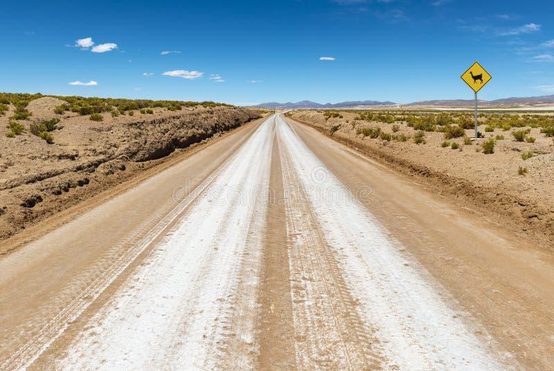 Lama na estrada em Uyuni, Bolívia imagens de stock royalty free