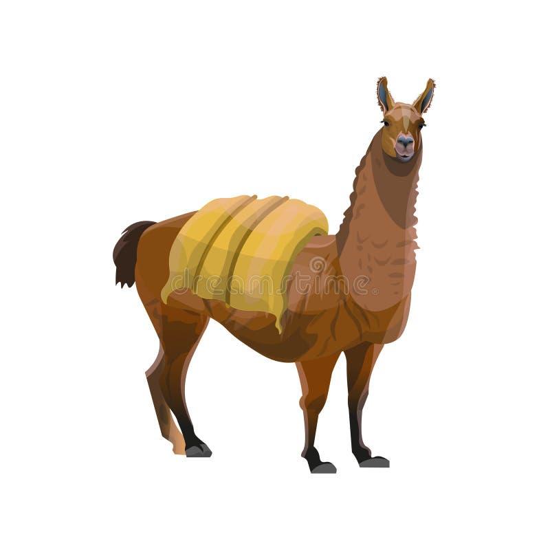 Lama niesie ciężkiego ładunek ilustracji