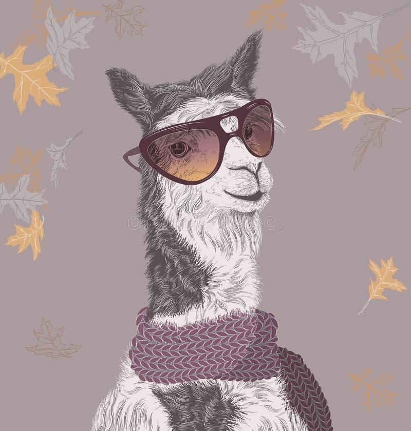 Lama på höstbakgrunden i solglasögon och halsduk vektor illustrationer