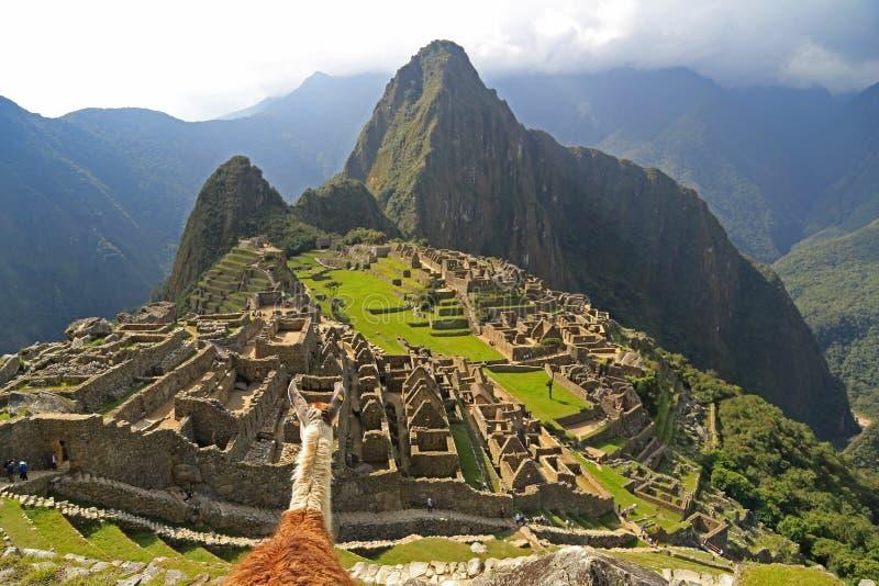 Lama regardant Machu Picchu, Pérou image libre de droits