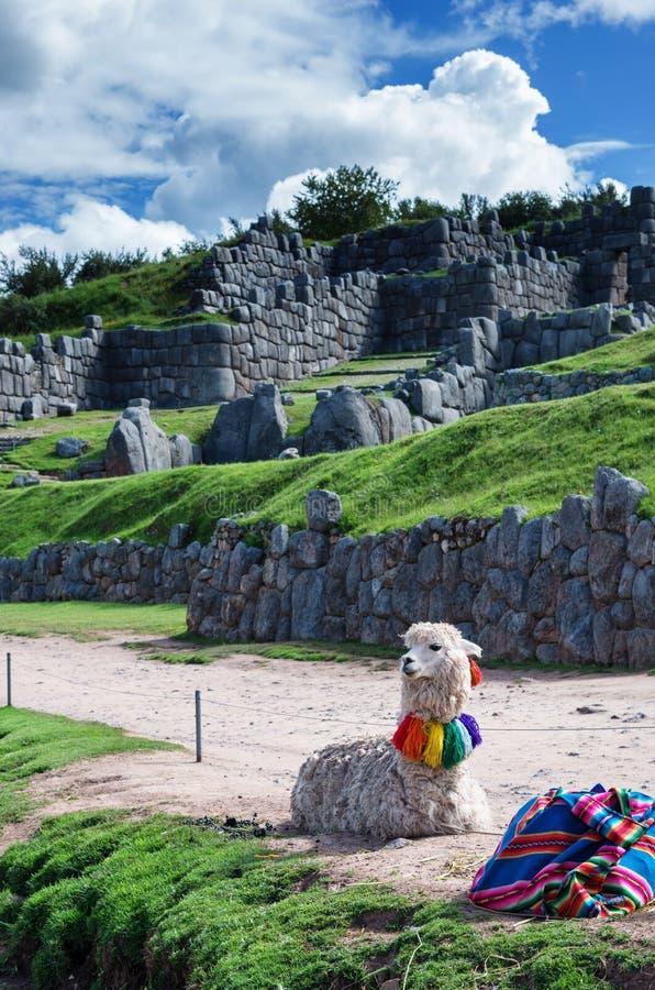 Lama in Sacsayhuaman in Cuzco, Peru stock foto