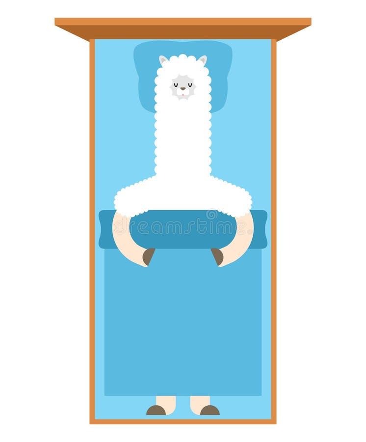 Lama som sover i säng Lama Cute djur alpaca Tecknad filmvektor stock illustrationer