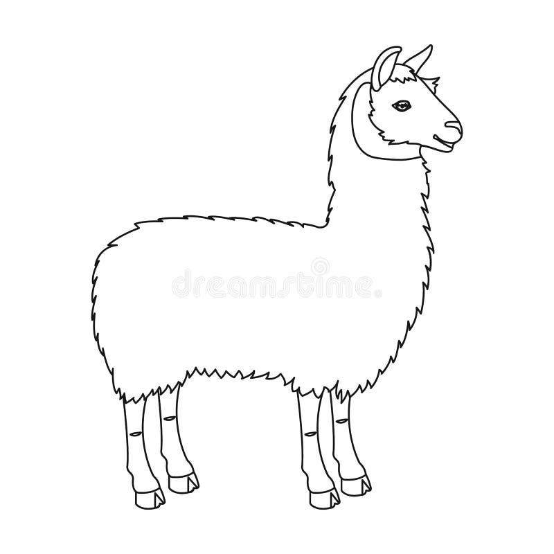 Lama, um sul - animal de bloco americano Um aleijado, um único ícone do mamífero fender-hoofed no estoque do símbolo do vetor do  ilustração stock