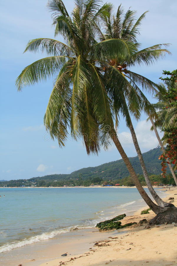 lamai пляжа стоковое фото rf
