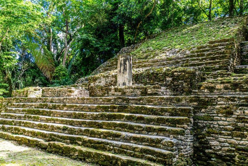 Lamanai rezerwat archeologiczny majan ruiny Stella Belize obrazy royalty free