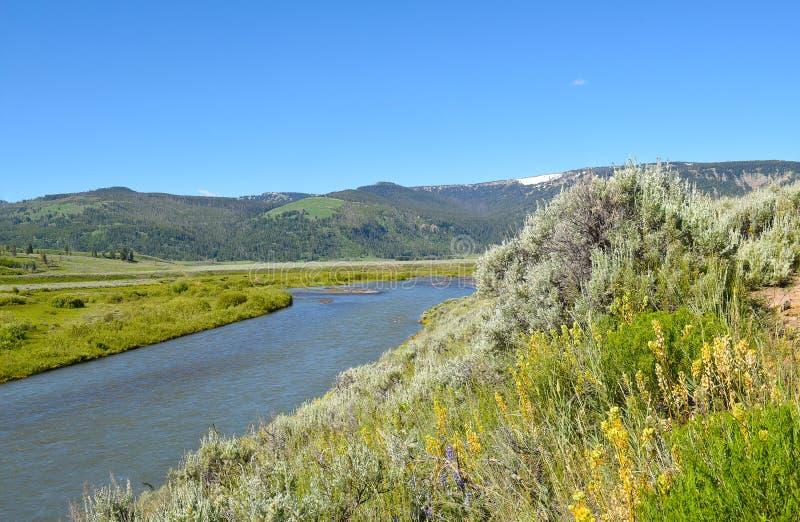 Lamar Valley en Lamar River royalty-vrije stock foto's