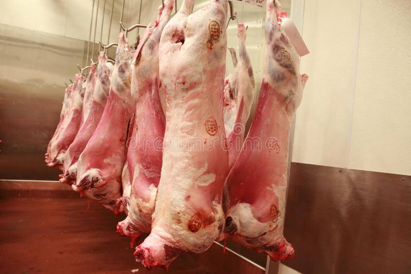 Lamb carcasses in an abattoir. 's refrigerator royalty free stock photos
