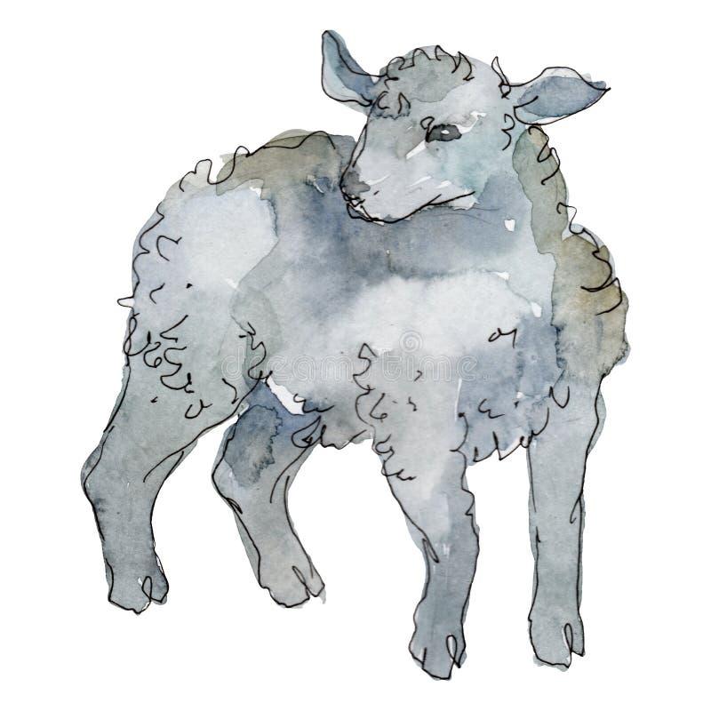 Lamb farm animal isolated. Watercolor background illustration set. Isolated sheep illustration element. Lamb farm animal isolated. Watercolor background stock image