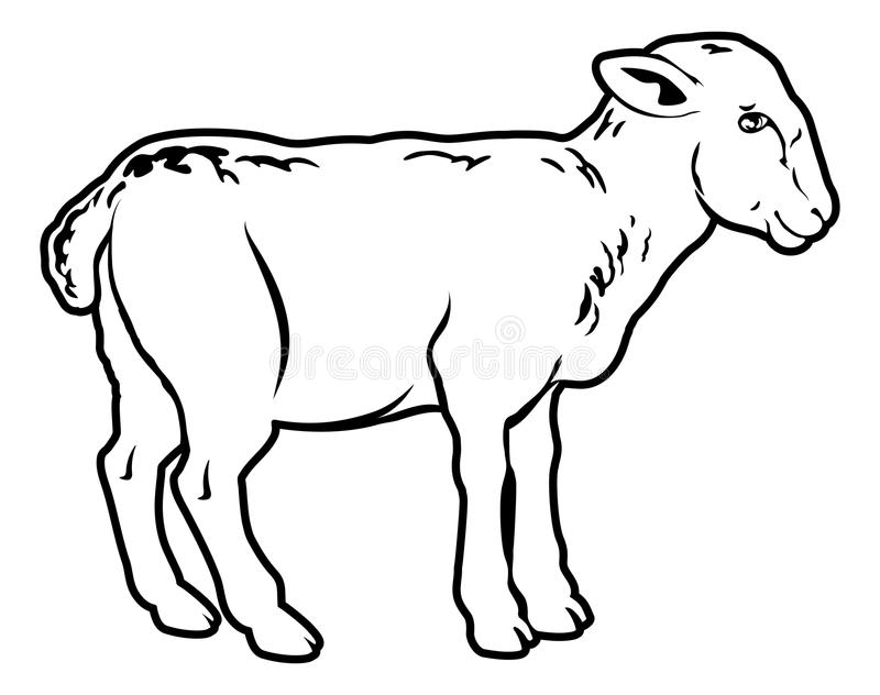 Lamb. An illustration of a lamb, could be a food label or menu icon for lamb royalty free illustration