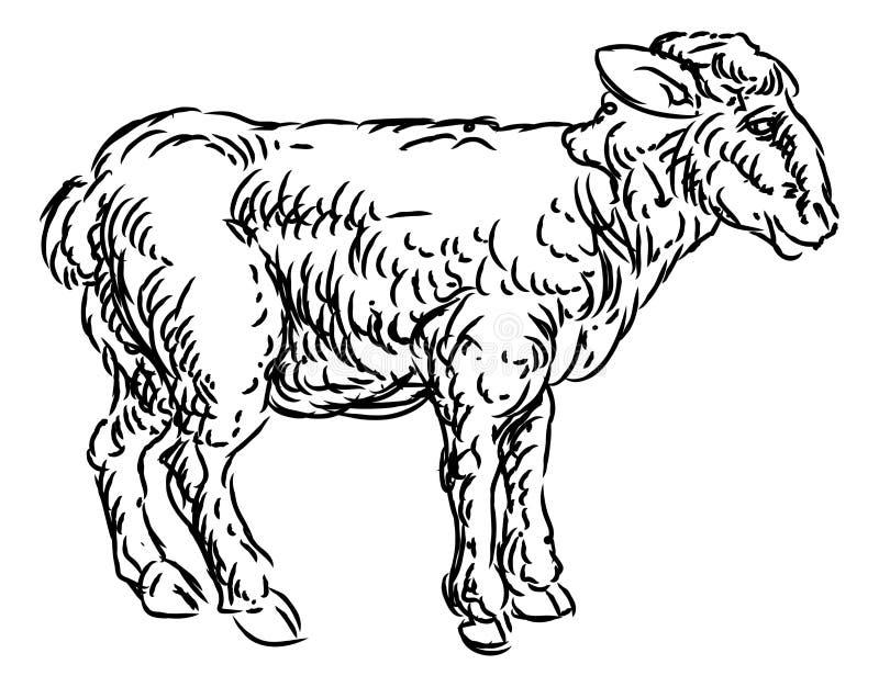 Lamb Sheep Food Grunge Style Hand Drawn Icon vector illustration