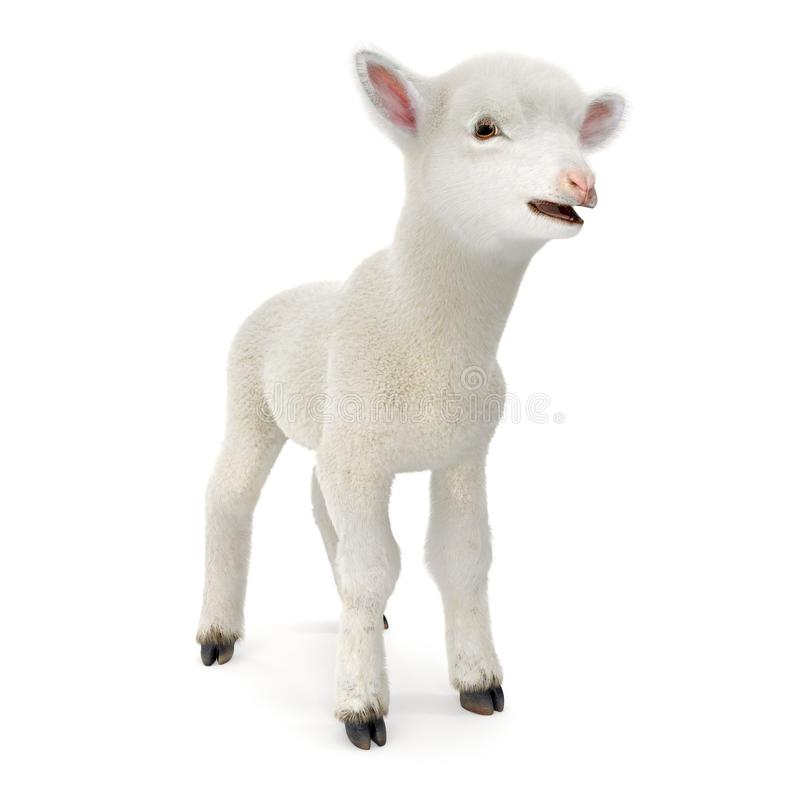 Lamb standing up, isolated on a white. 3D illustration royalty free illustration