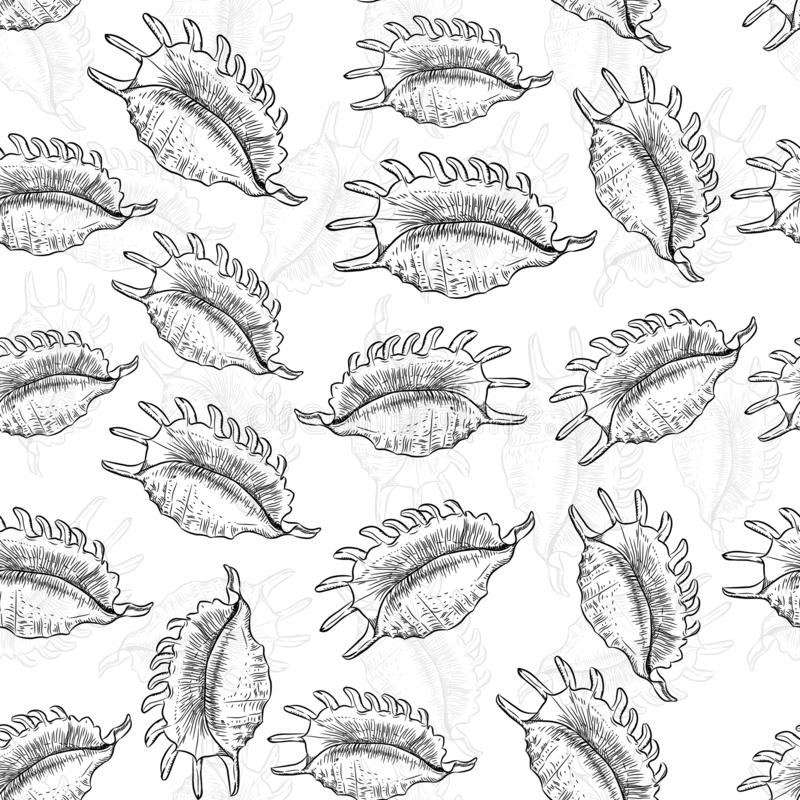 Lambis spider conch, large sea snail, a marine gastropod mollusk in the family Strombidae, conchs. Unique shells, molluscs. Sketch stock illustration