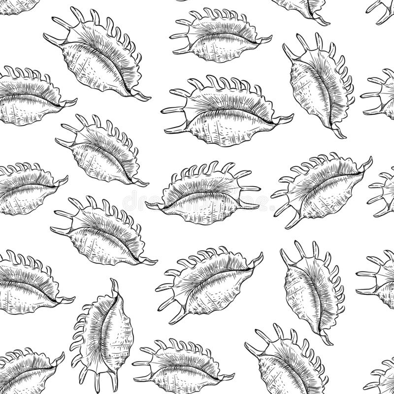Lambis spider conch, large sea snail, a marine gastropod mollusk in the family Strombidae, conchs. Unique shells, molluscs. Sketch royalty free illustration