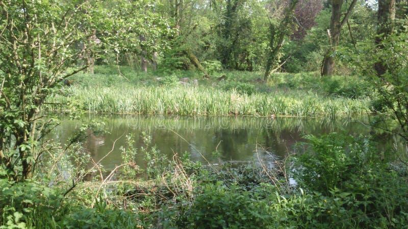 Lambourn river stock image