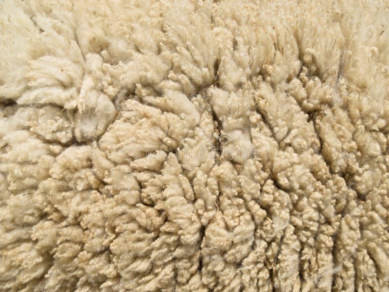 lambswooltextur royaltyfri fotografi