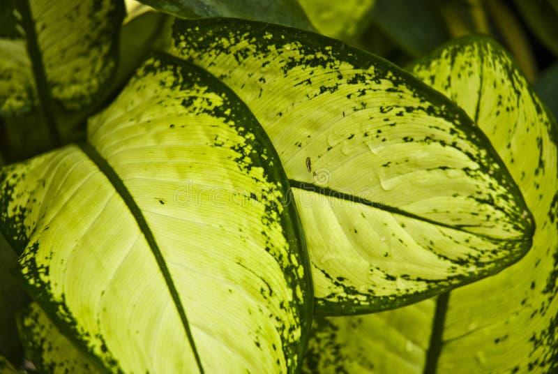 lame abstraite de vert de fond tropicale photos stock