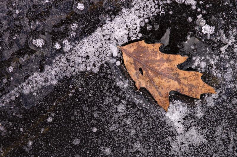 Lame congelée en glace photo stock