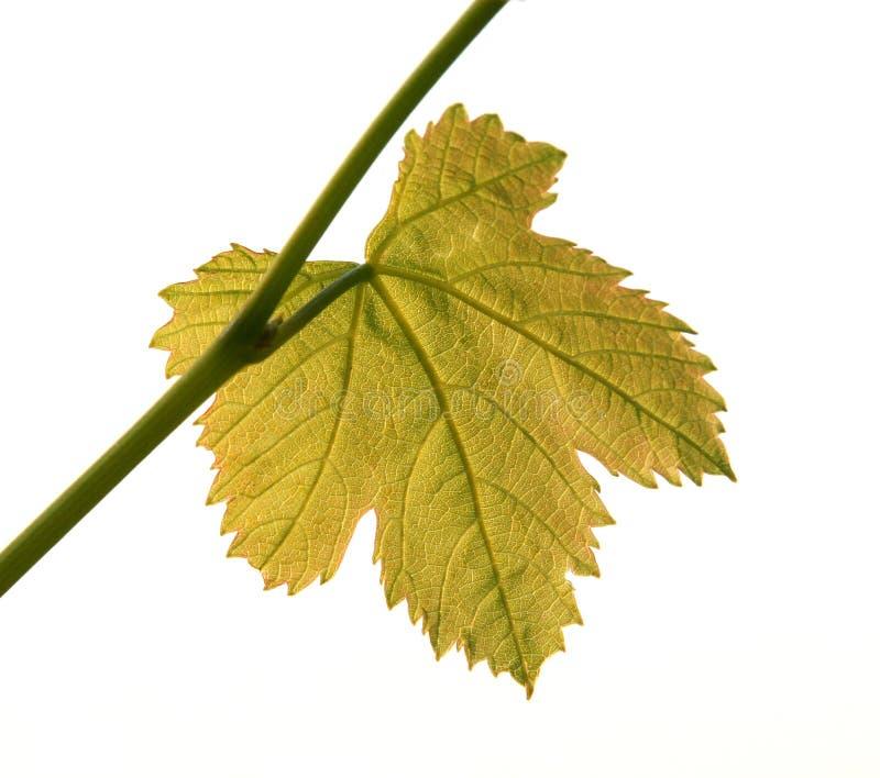 Lame contre éclairée de vigne images stock