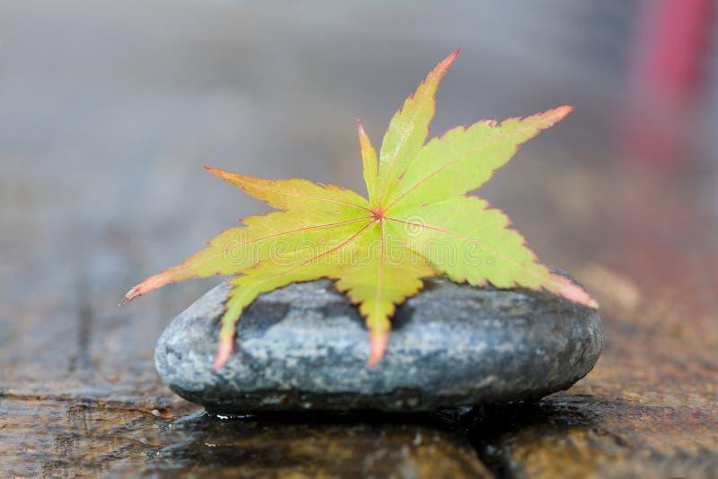 Lame d'automne sur la pierre photo stock