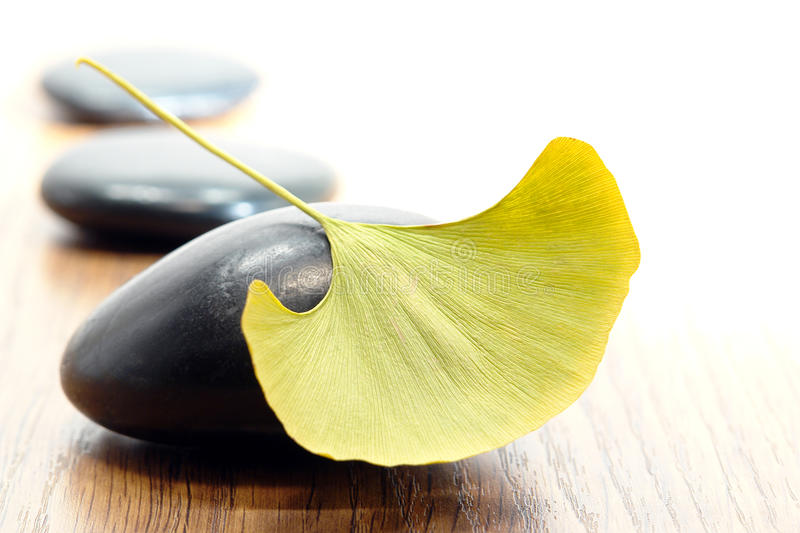Lame de Ginkgo sur la pierre polie par massage photo libre de droits