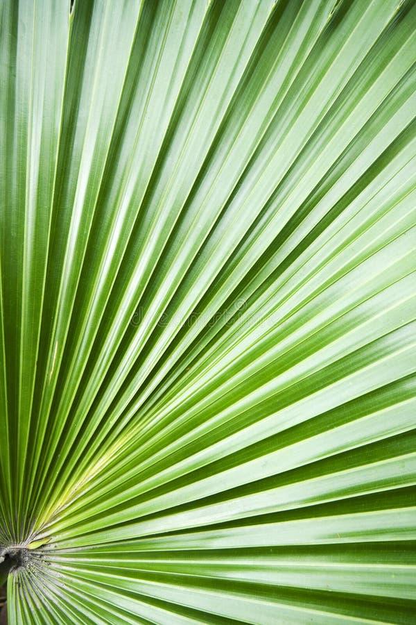 Lame de palmier photographie stock