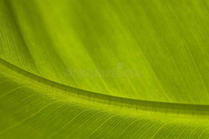 Lame de paume/banane photographie stock