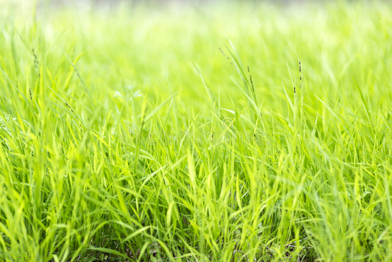 Lame di erba lunghe fotografia stock