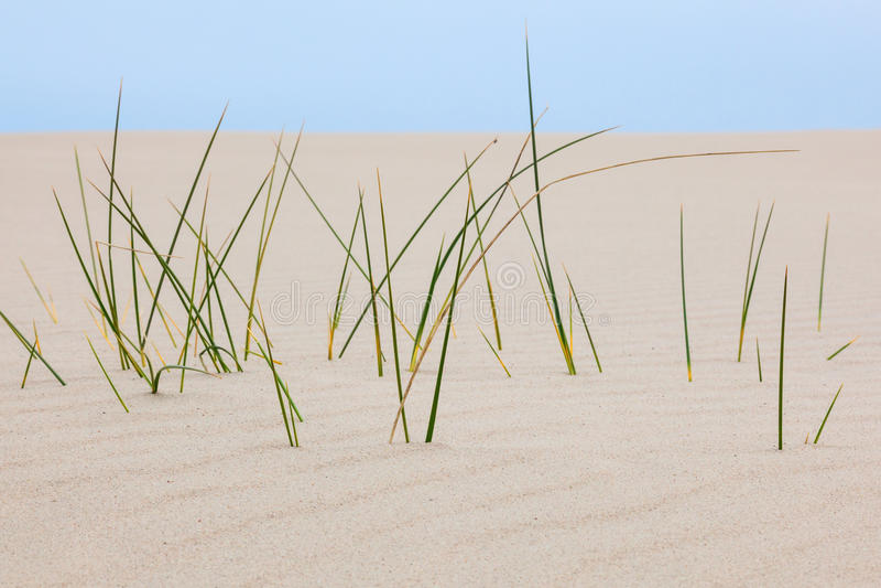 Lame di erba nella sabbia fotografia stock