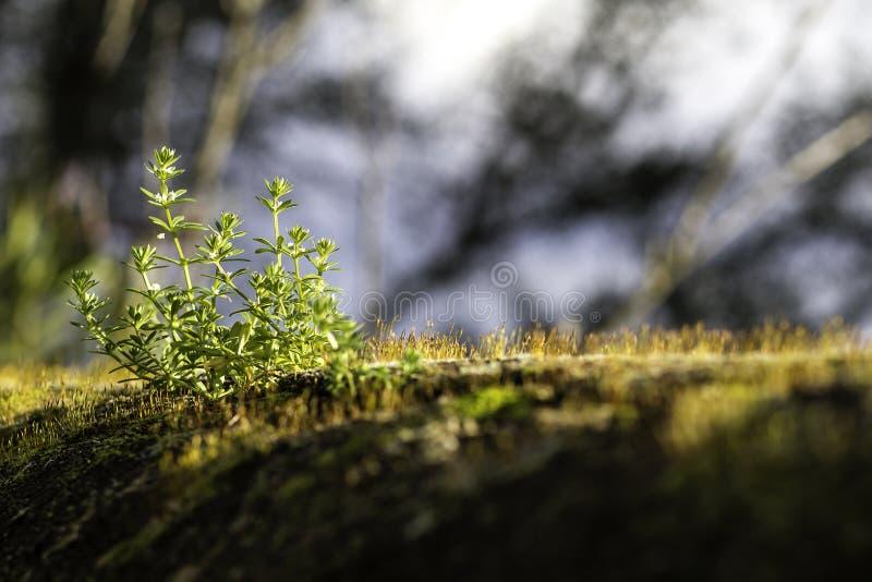 Lame di erba in una parete fotografia stock libera da diritti