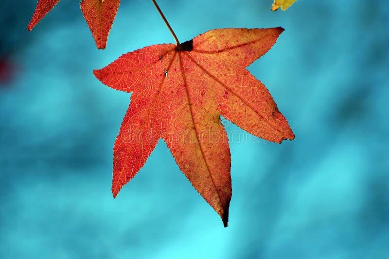 Lame en automne photo libre de droits