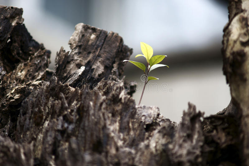 Lame neuve sur un vieil arbre photographie stock libre de droits