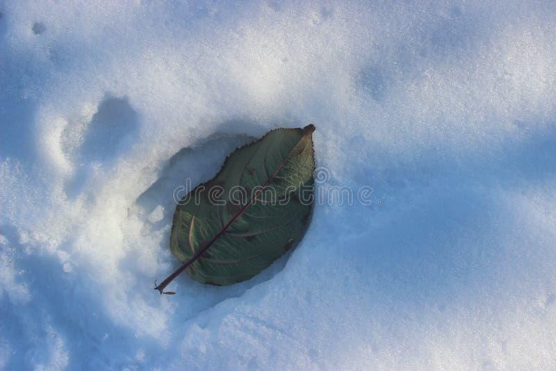 Lame tombée sur la neige photographie stock libre de droits