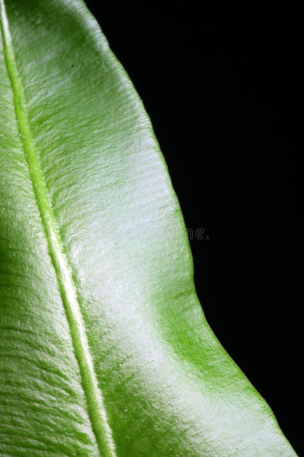 Lame verte abstraite photographie stock libre de droits