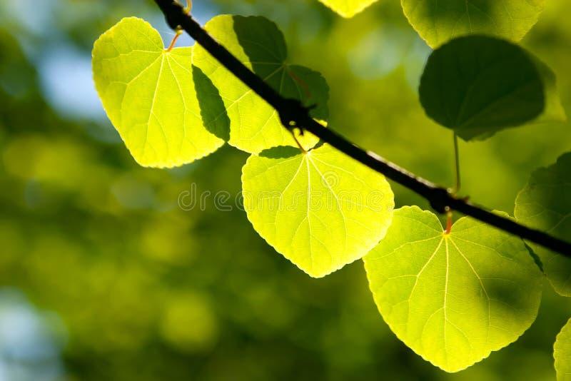 Lame verte au soleil dans la forêt photo stock