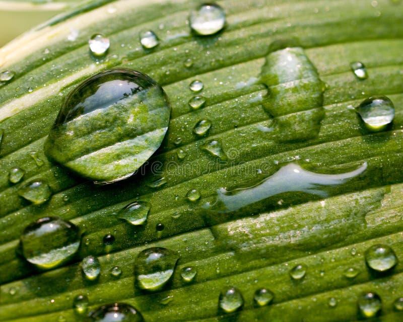 Lame verte avec des gouttelettes d'eau photographie stock libre de droits