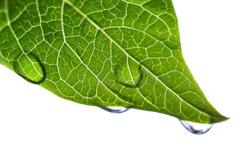 Lame verte avec des gouttelettes d'eau image stock
